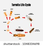 termite life cycle cartoon... | Shutterstock .eps vector #1048334698