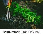 gardening  weeding weeds.... | Shutterstock . vector #1048449442