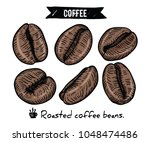 collection of coffee beans by... | Shutterstock .eps vector #1048474486