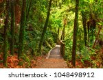 pathway through new zealand... | Shutterstock . vector #1048498912