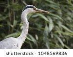 grey heron ardea cinerea bird | Shutterstock . vector #1048569836