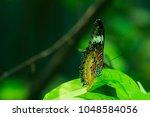 butterfly in the garden | Shutterstock . vector #1048584056
