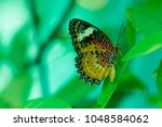 butterfly in the garden | Shutterstock . vector #1048584062