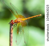 Dragonfly On A Background Of...