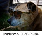 Funny Dog In Sunglasses On A...