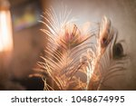 feather the pavilion in the... | Shutterstock . vector #1048674995