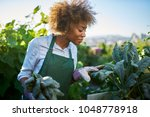 Small photo of african american woman tending to kale in communal urban garden
