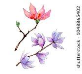 wildflower magnolia flower in a ... | Shutterstock . vector #1048865402