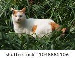 Fluffy Calico Cat In Grass Bush