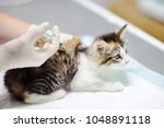 Stock photo female veterinary doctor giving injection for cute kitten cat in a veterinary clinic vet surgeon 1048891118
