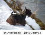 dog scottish terrier | Shutterstock . vector #1049058986