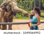 Mom And Son Feed The Elephant...
