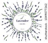vector lavender hand drawn... | Shutterstock .eps vector #1049077262