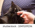 funny beautiful cute black cat... | Shutterstock . vector #1049109236