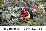 indian giant squirrel   Shutterstock . vector #1049117765