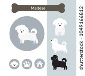Stock vector maltese dog breed infographic illustration front and side view icon 1049166812