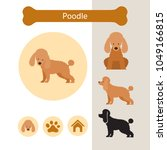 poodle dog breed infographic ... | Shutterstock .eps vector #1049166815