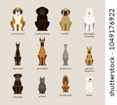 dog breeds set  giant and large ... | Shutterstock .eps vector #1049176922