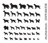 Stock vector dog breeds silhouette set side view vector illustration 1049186558