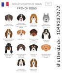 dogs by country of origin.... | Shutterstock .eps vector #1049237072