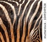 Zebra Background  Black And...