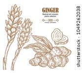 ginger plant set. hand drawn...   Shutterstock .eps vector #1049262038