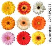 Wonderful Colorful Gerberas ...