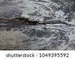wood texture for background. | Shutterstock . vector #1049395592