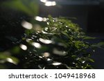 trees leaf  nature green... | Shutterstock . vector #1049418968