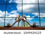 pair of wedding shoes....   Shutterstock . vector #1049424125