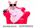 chihuahua dog watching tv or a... | Shutterstock . vector #1049458352