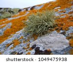 Arctic lichens. Rock surface with lichen and moss texture. Nature colors abstract background.