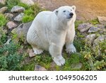 polar bear in the wilderness.... | Shutterstock . vector #1049506205