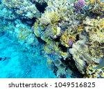 landscape under water in the... | Shutterstock . vector #1049516825