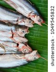 Small photo of Siluridae,Shark catfish(Sheatfishes) Put on banana leaf for sale in Thailand market.