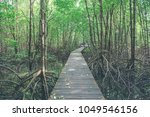 mangrove trees and roots nature ... | Shutterstock . vector #1049546156