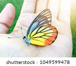 beautiful color butterfly on...   Shutterstock . vector #1049599478