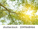 abstract spring image. green... | Shutterstock . vector #1049668466