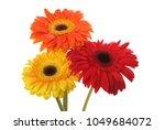 red and yellow gerbera flower... | Shutterstock . vector #1049684072