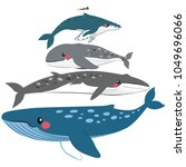 infographic whale illustration... | Shutterstock .eps vector #1049696066