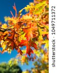 Small photo of beautiful Indian summer