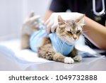 female veterinary doctor giving ... | Shutterstock . vector #1049732888