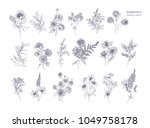 set of beautiful floristic... | Shutterstock .eps vector #1049758178