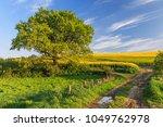 Agricultural Spring Landscape...