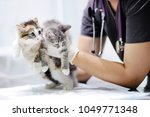 young female veterinary doctor... | Shutterstock . vector #1049771348