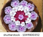 """Small photo of Mandala flowers floating on water in Sri Lanka. The word """"mandala"""" has a complex religious meaning,and for Hindus, it means circle and represents the Universe."""