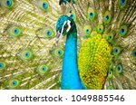face and neck of an indian... | Shutterstock . vector #1049885546