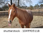horse sticking out her tongue | Shutterstock . vector #1049905118