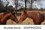 horses nuzzling one another in... | Shutterstock . vector #1049905202