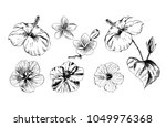 tropical flowers and leaves on... | Shutterstock .eps vector #1049976368